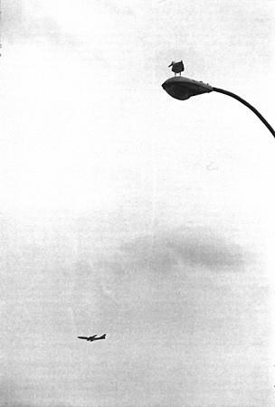 Eliott Erwitt - Coney Island - 1975