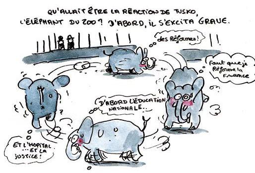 l'éléphant de Marion